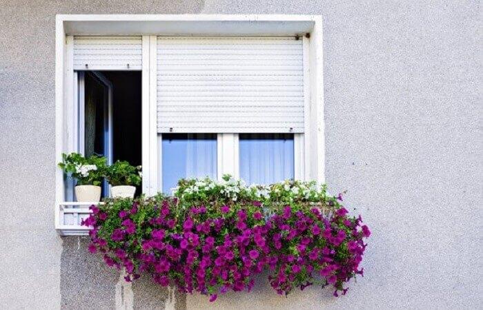 Flores de petúnia cultivadas em jardineira