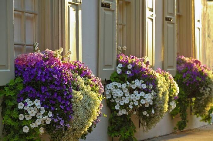 Flores de petúnia encantam a decoração de fachada desta casa