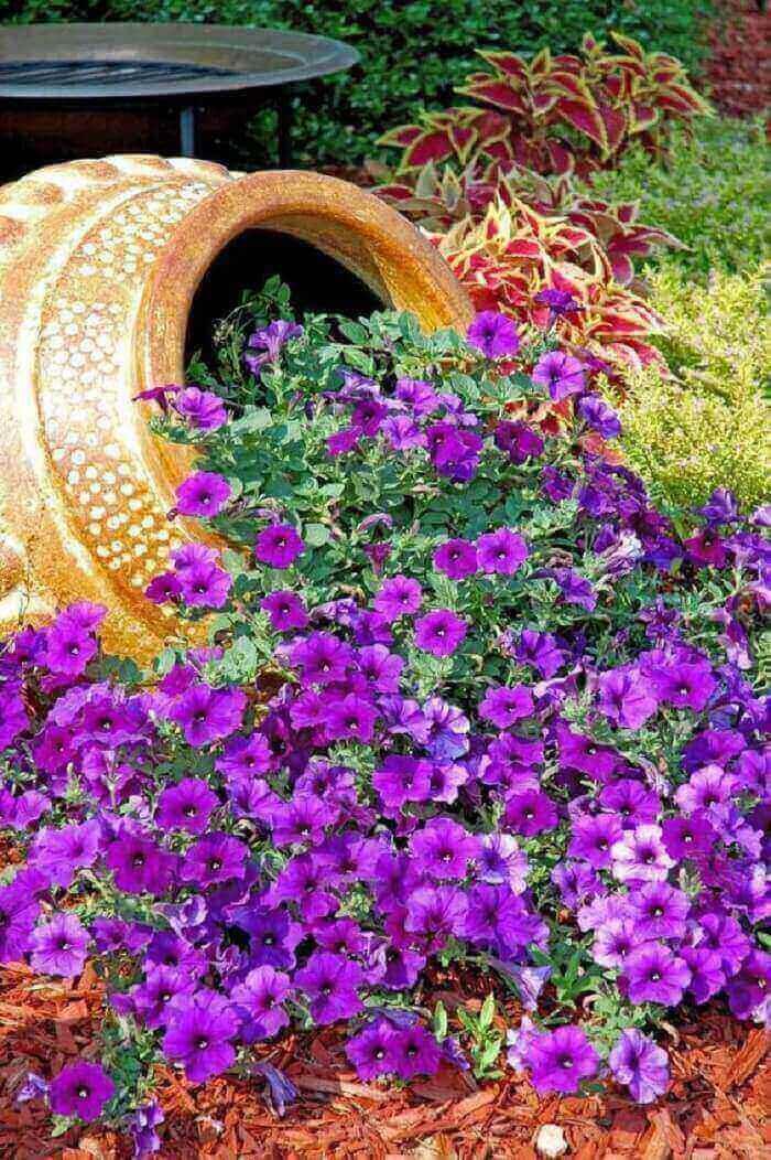 Flores de petúnia se esparramam pelo solo