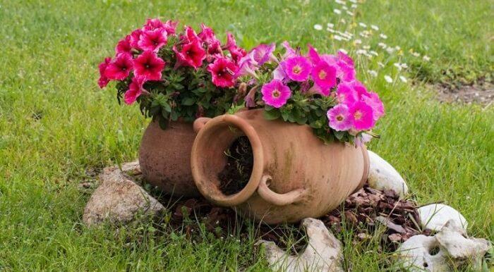 Flores de petúnia sendo cultivadas em vasos de barro