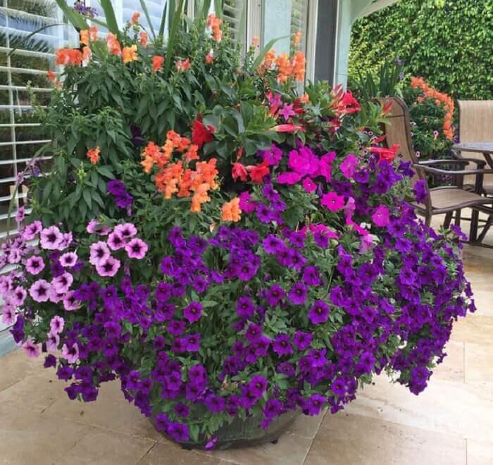 Forme um arranjo fantástico mesclando flor de petúnia com outras plantas