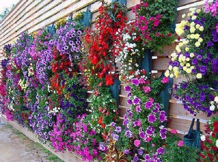 Lindos arranjos de petúnia formam um jardim vertical no ambiente