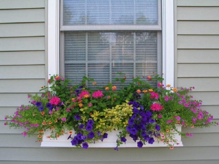 Mescle flores de petúnia com outras flores e forme uma jardineira especial