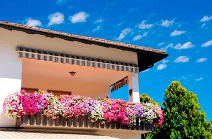 Petúnia cultivada em lindas jardineiras suspensas na varanda