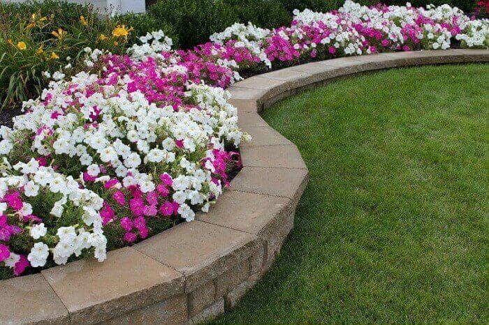 Petúnias cultivadas em área externa contornam o jardim