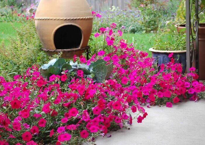 Petúnias de cor rosa cultivadas em um lindo jardim