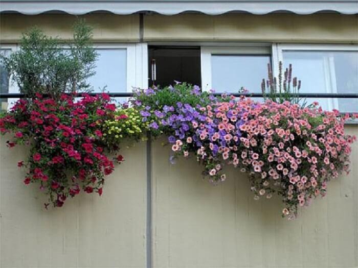 Petúnias em tonalidades variadas encantam a decoração da fachada desta residência
