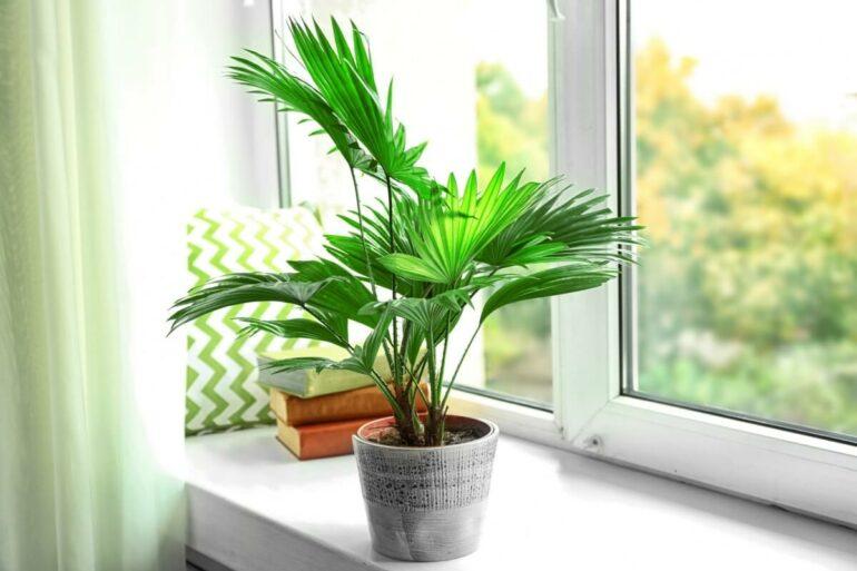 Vasos decorados ficam lindos com palmeira ráfia. Fonte: Pinterest