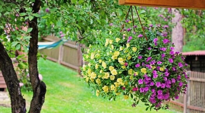 Vasos suspensos com flores de mini petúnia