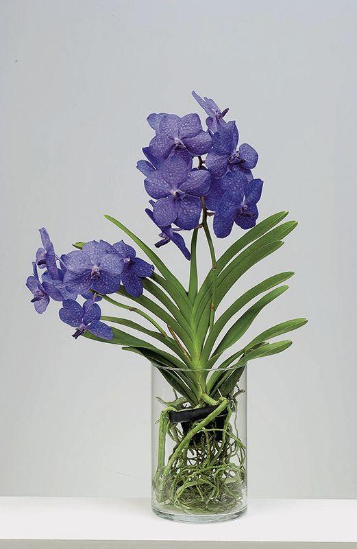 orquídea vanda - arranjo de orquídea vanda em vaso de vidro