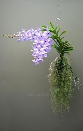 orquídea vanda - arranjo de orquídea vanda lilás
