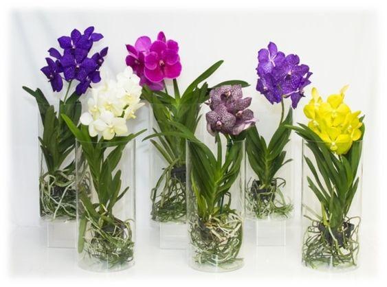 orquídea vanda - arranjos de orquídea vanda de diferentes cores