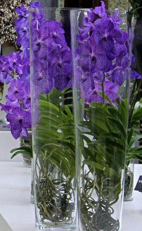 orquídea vanda - arranjos de orquídea vanda em vaso de vidro