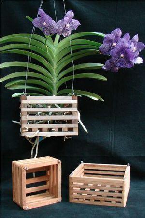 orquídea vanda - orquídea vanda em caixotes