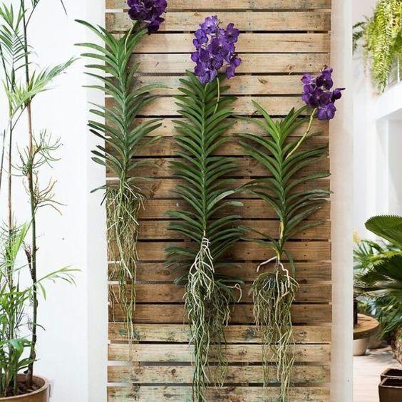 orquídea vanda - três orquídeas vandas em painel de madeira