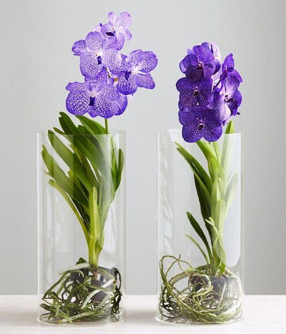 orquídea vanda - vasos de orquídea vanda