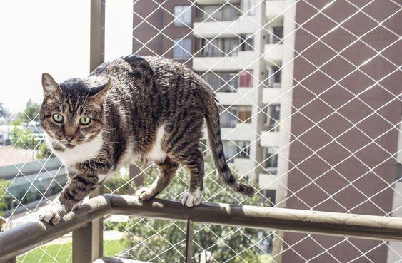 redes de proteção - gato em sacada protegida com rede