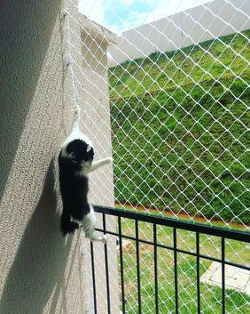 redes de proteção - gato pendurado em rede de proteção