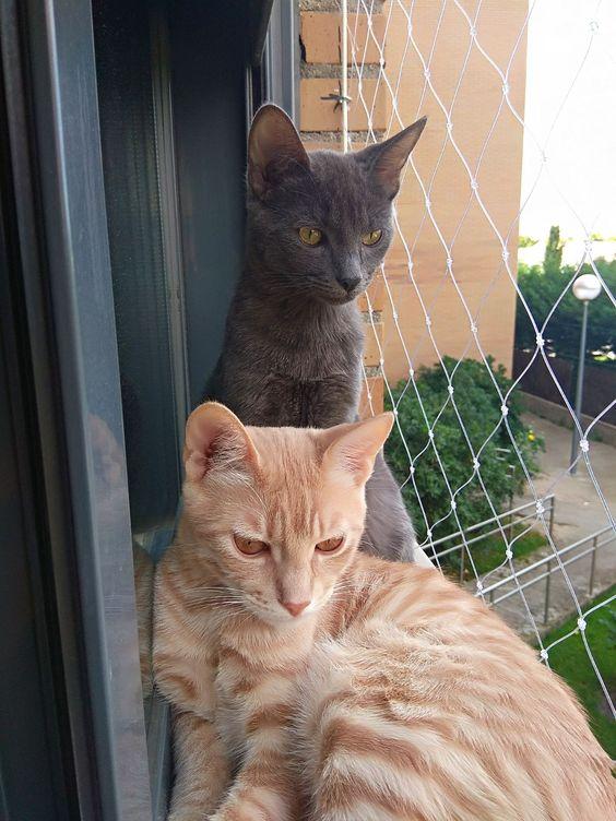 redes de proteção - gatos em frente a rede de proteção
