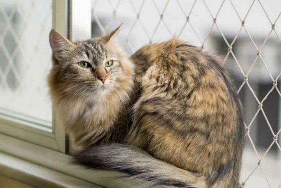 redes de proteção - gatos em janela protegida por rede