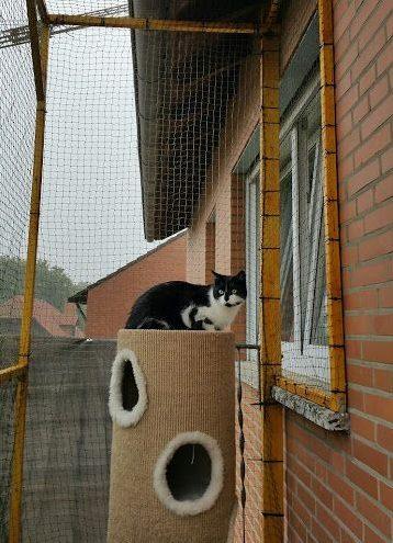 redes de proteção - rede de proteção em quintal