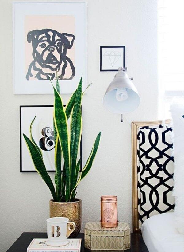A Espada de São Jorge é uma das plantas para apartamento preferidas do público