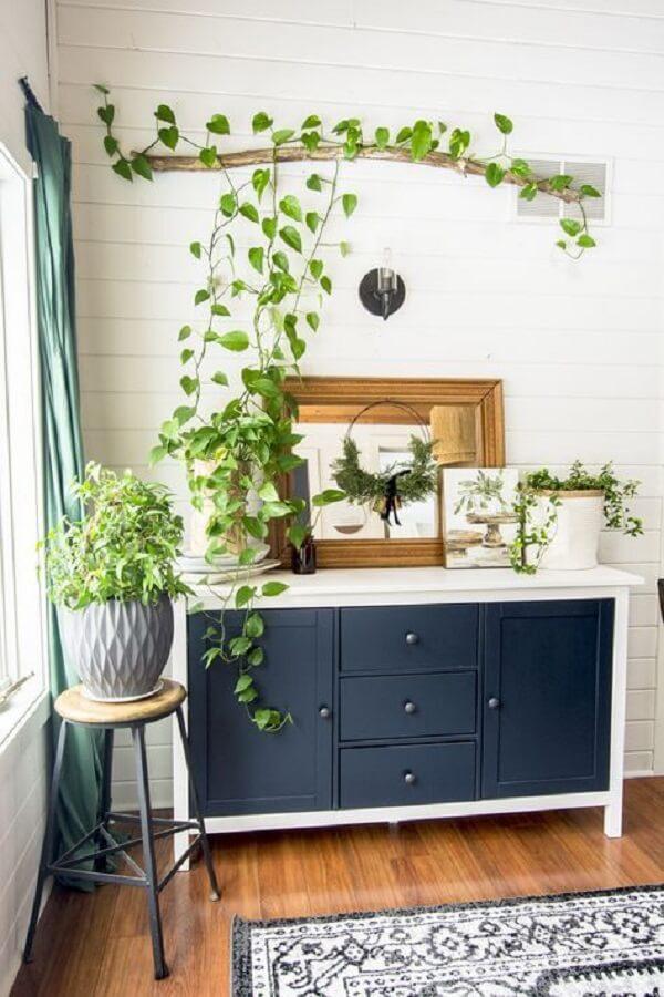 Escolha com atenção as plantas para apartamento que irão fazer parte da sua decoração