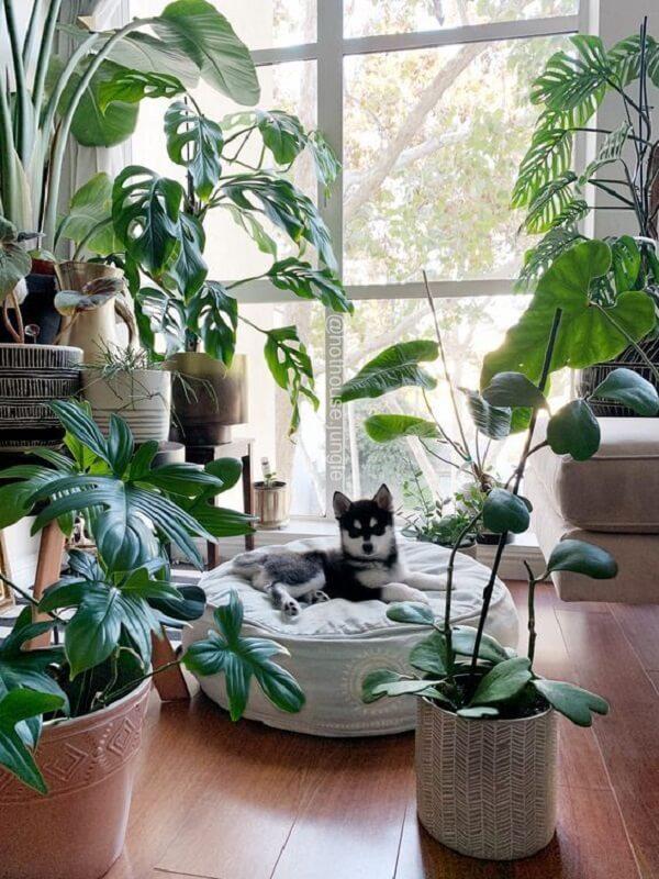 Forme um mini refúgio incluindo diversas plantas para apartamento