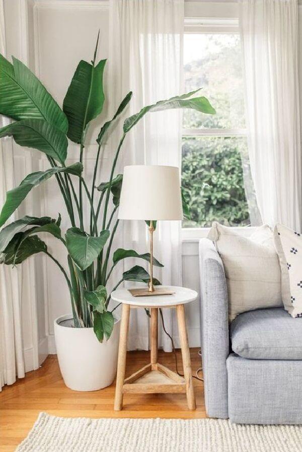Mescle diferentes plantas para apartamento