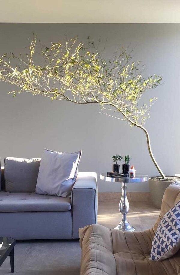 O Bambu Mossô é uma das plantas para apartamento que traz um efeito lindo na decoração