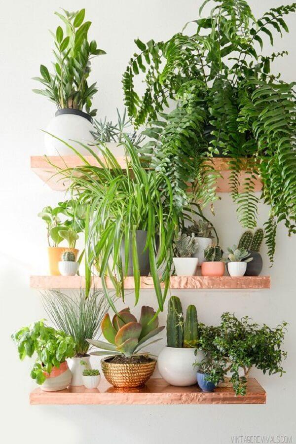 Utilize as prateleiras para acomodar todas as plantas para apartamento