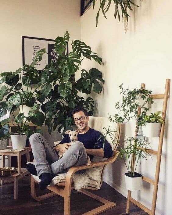 costela de adão - casa com muitas plantas