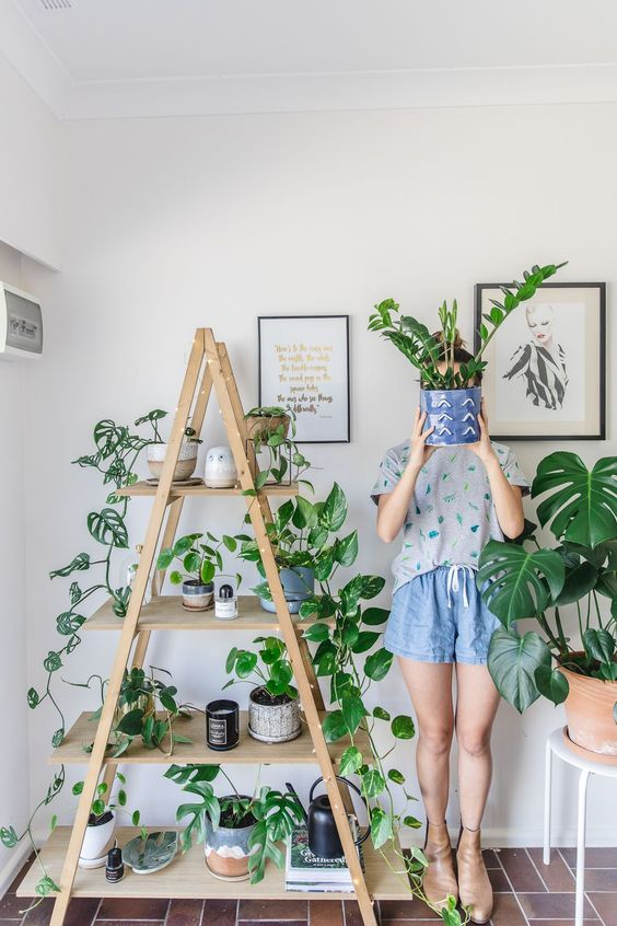 costela de adão - casa com plantas