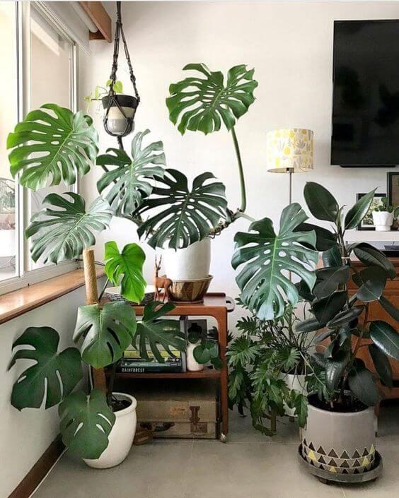 costela de adão - casa com vasos de plantas