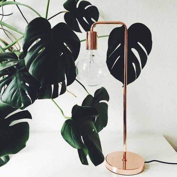 costela de adão - folhas de monstera ao lado de luminária de mesa
