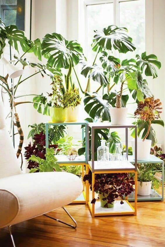 costela de adão - sala com plantas grandes