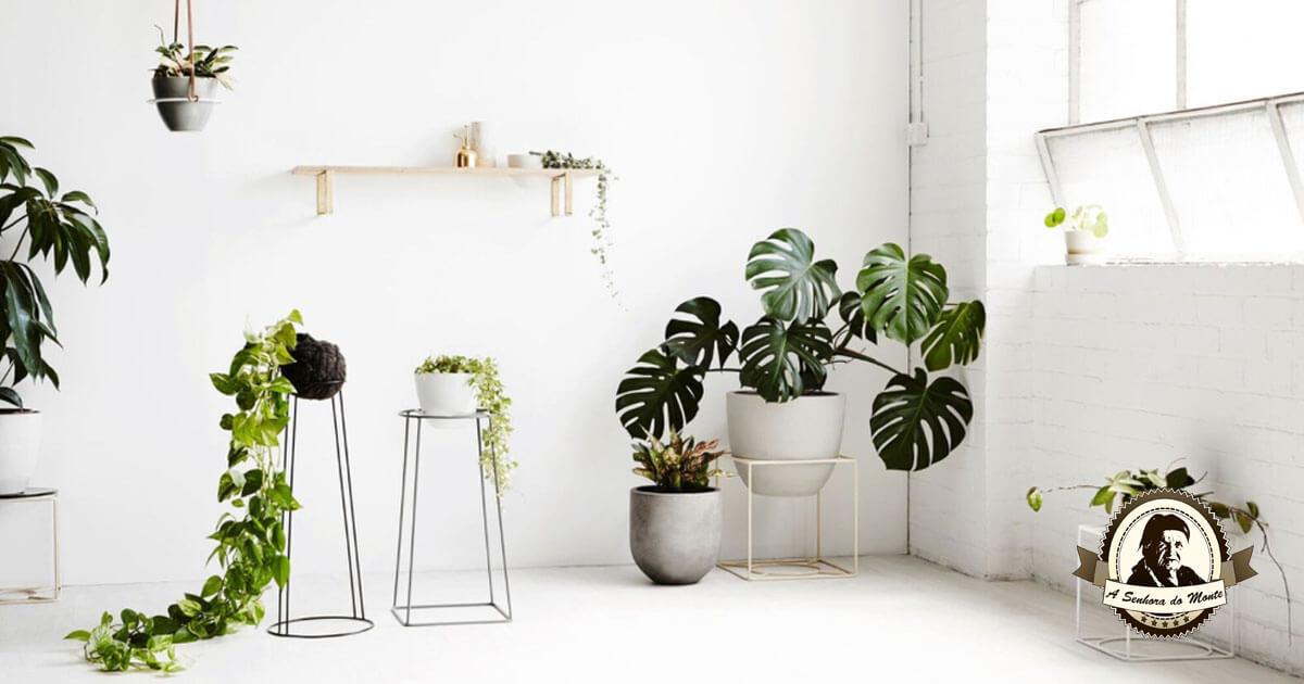 costela de adão - sala com vasos de plantas