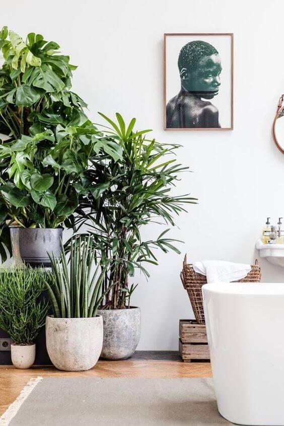 costela de adão - sala com vasos de plantas variadas