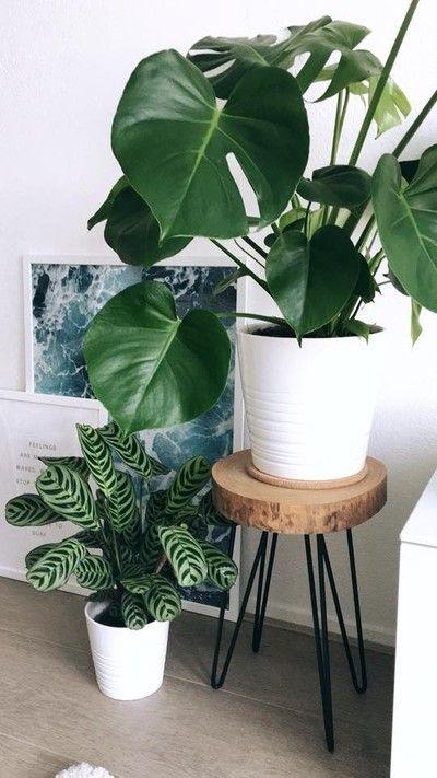 costela de adão - vaso branco de monstera em cima de banco