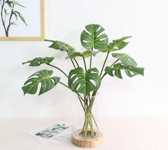 costela de adão - vaso simples de vidro com folhas de monstera