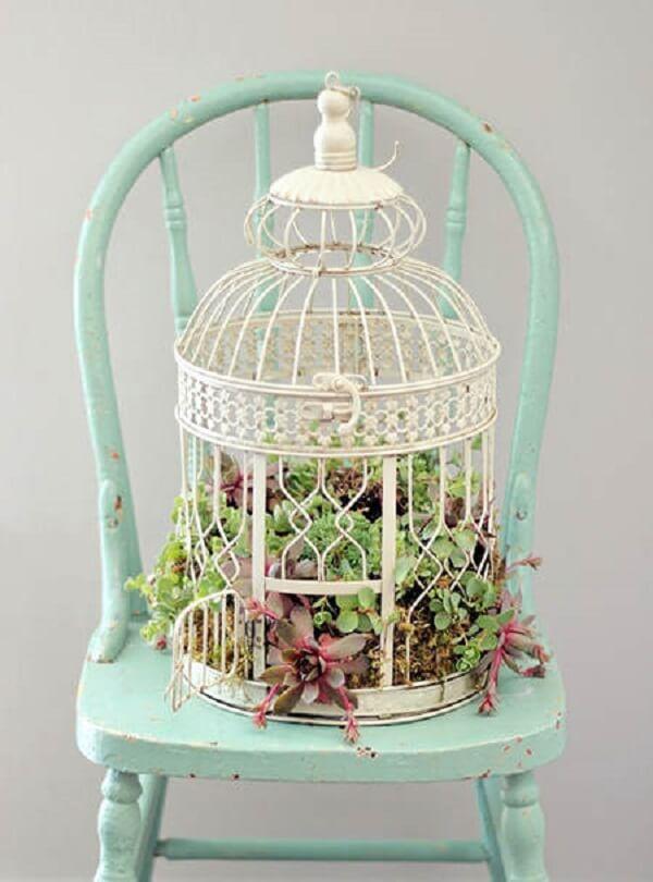 Invista em gaiolas decorativas com suculentas