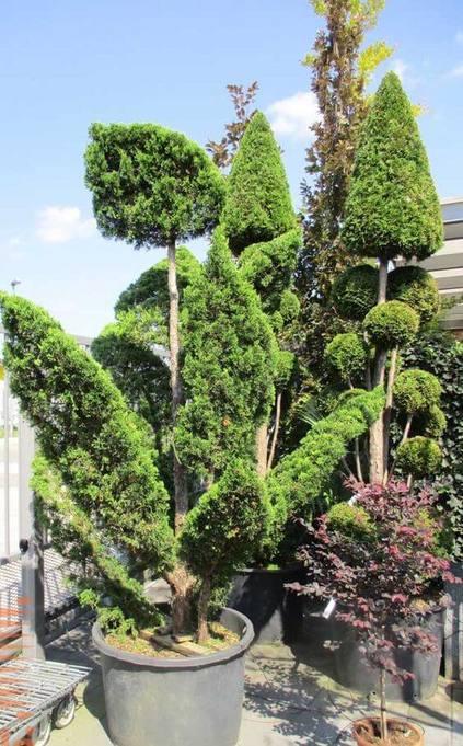 kaizuka - jardim com kaizuka grande