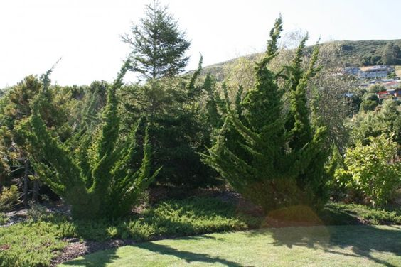 kaizuka - jardim com kaizukas