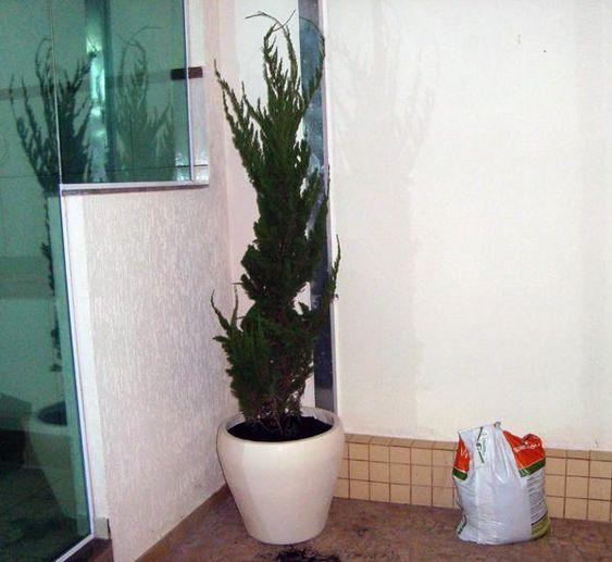 kaizuka - kaizuka em vaso
