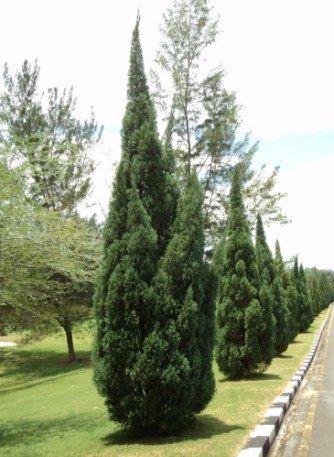 kaizuka - kaizuka grande em jardim