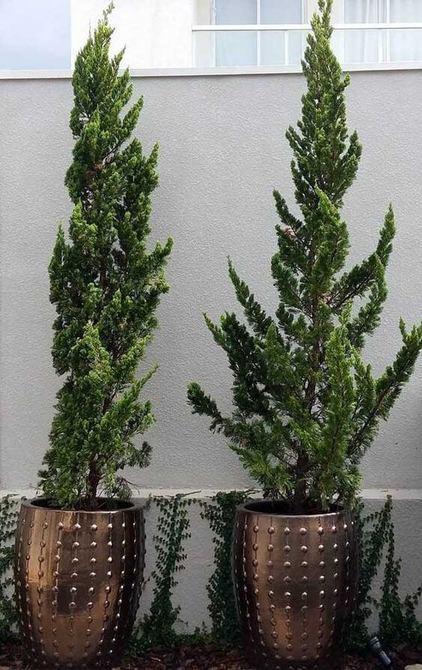 kaizuka - kaizukas em vasos cobre