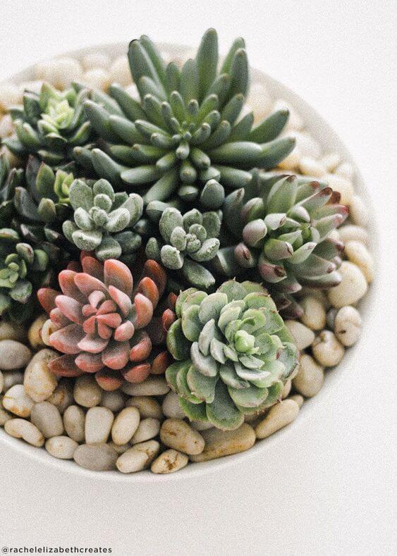 plantas artificiais para decoração - suculenta artificial
