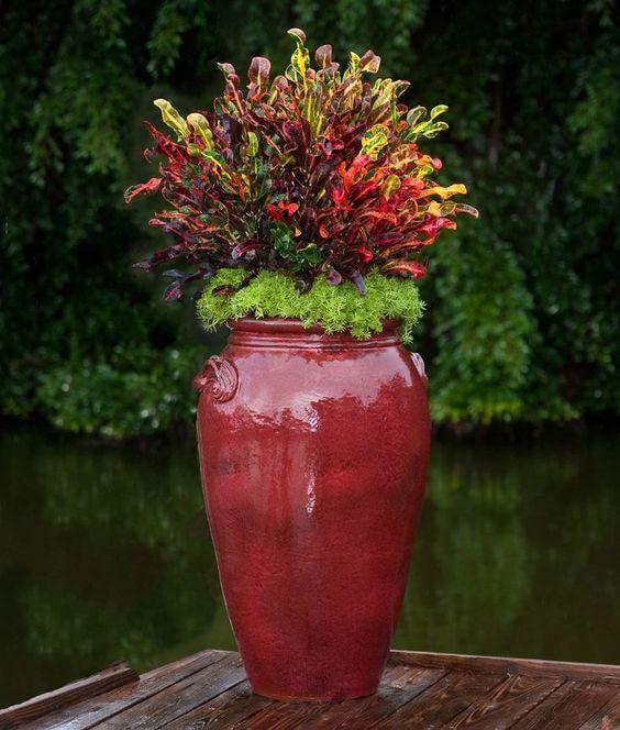 vaso vietnamita vermelho