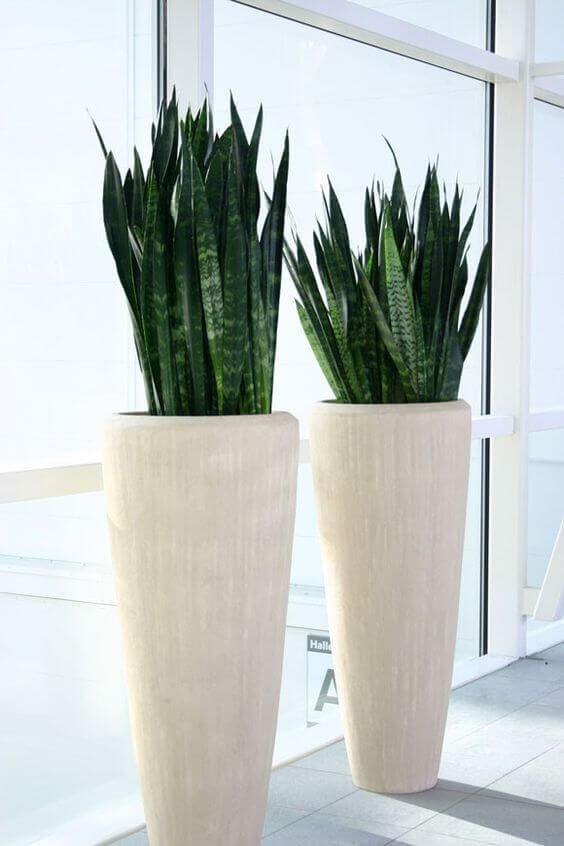 vaso vietnamita branco
