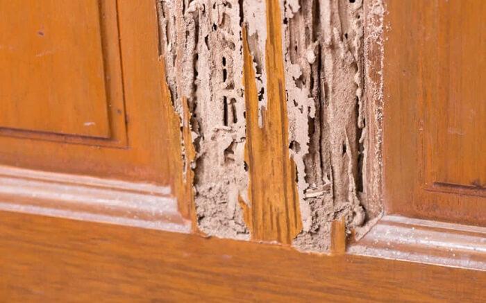 Utilize inseticida ou fungicida nas partes maltratadas do móvel de madeira